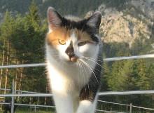 Molly die Katze der Familie Wörgötter, Pferdezucht Wörgötter