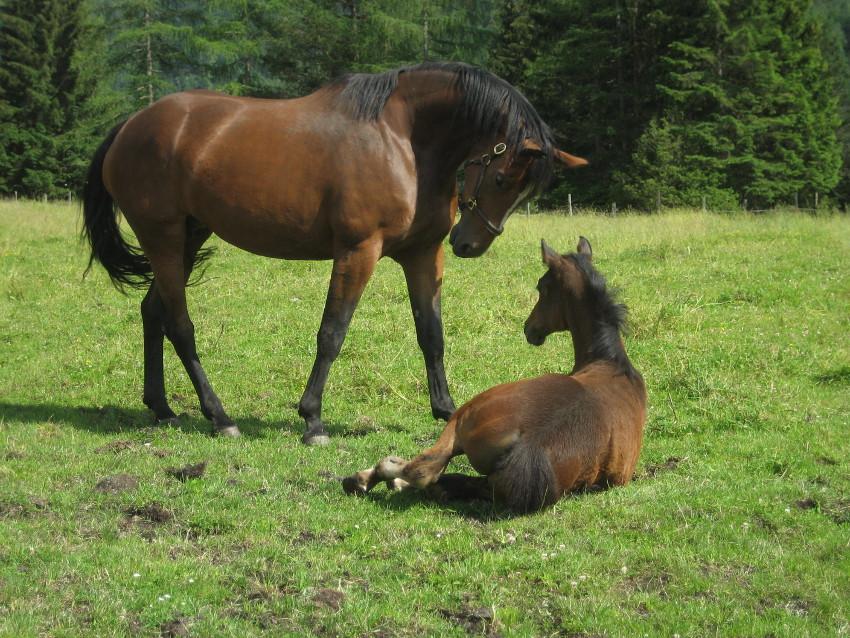 Pferdezucht Video